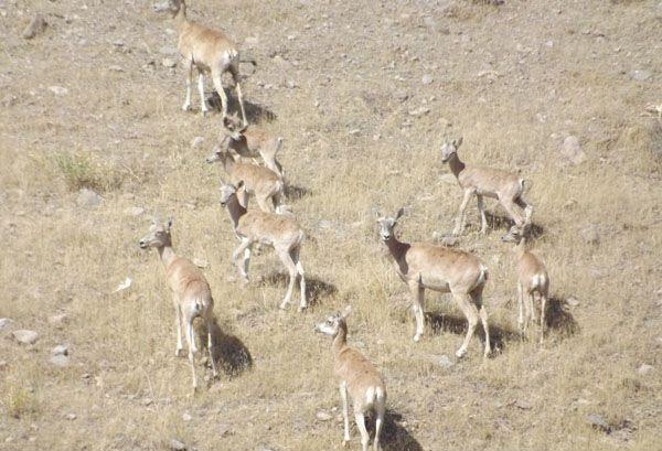 پارک ملی خجیر