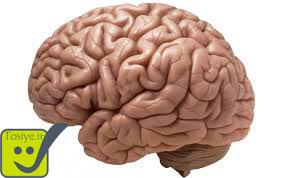 ناگفته های مغز آدمی