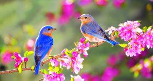 چند توصیه برای تغذیه فصل بهار